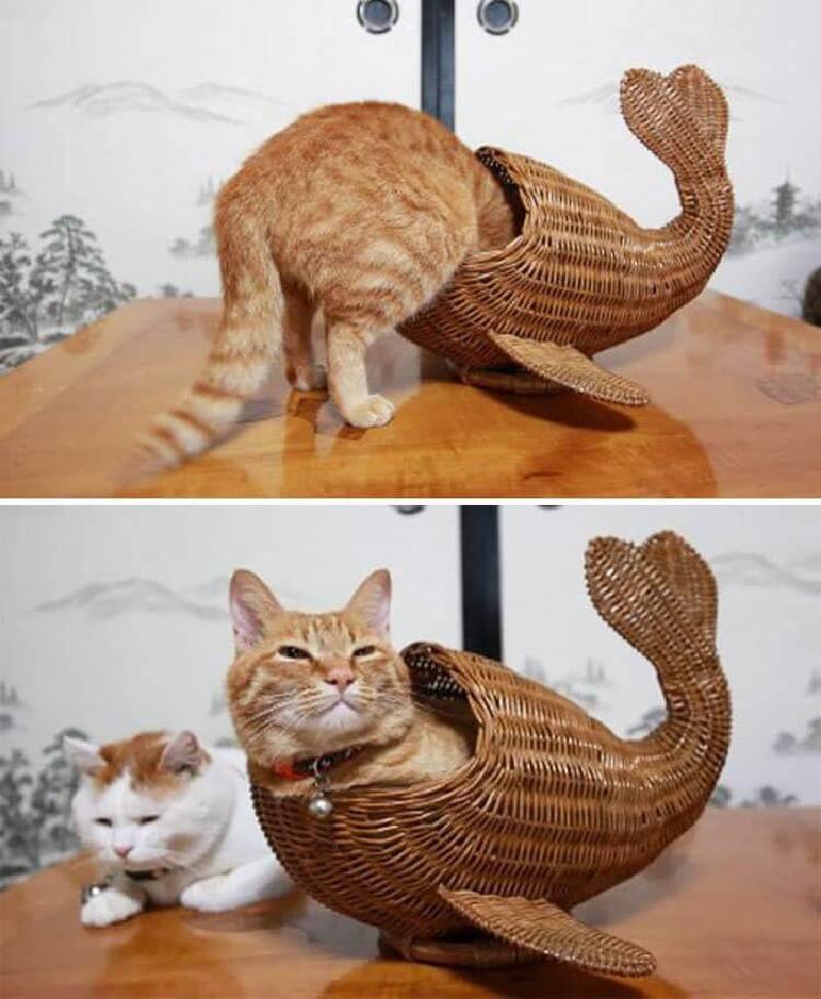 Уморительные доказательства того, что коты где угодно найдут своё счастье